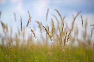 prairie herbeuse