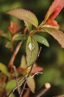 goutte de pluie assis sur une macro de feuille photo