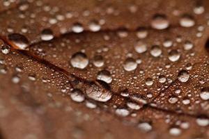 feuilles mortes couvertes de gouttes de pluie