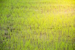 gros plan d'un riz déposé