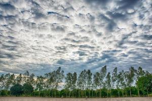 arbres sous un ciel dramatique