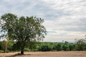 arbre sur le terrain