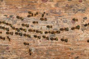 fourmis sur un arbre