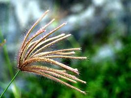 fleurs sauvages séchées dans la nature