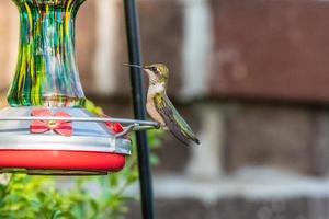 colibri sur une mangeoire
