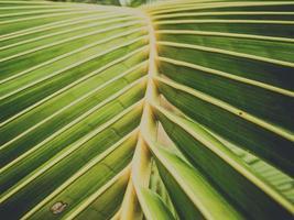 gros plan de feuilles de noix de coco naturelle