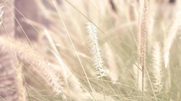 fleurs d'herbe sauvage de mise au point douce photo