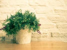 Plante en pot contre le mur de briques blanches photo