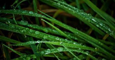 rosée du matin sur l'herbe photo