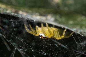 araignée sur une feuille, gros plan