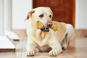 chien avec os photo