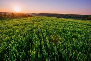fond de gouttes de rosée sur l'herbe verte brillante photo