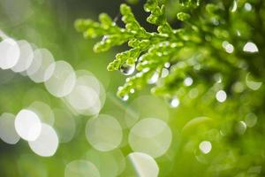matin frais et vert photo