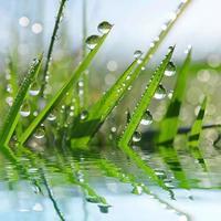 herbe verte fraîche avec goutte de rosée se bouchent. photo