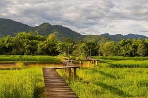 sentier en bois sur rizière et à travers la montagne