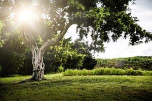 lever du soleil à travers un arbre photo