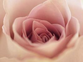flore nature couleur de fond doux photo