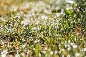 gouttes de rosée sur l'herbe photo