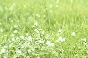 champ de petites fleurs blanches photo