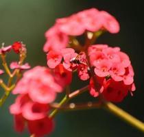 guêpe marchant sur une fleur rouge photo
