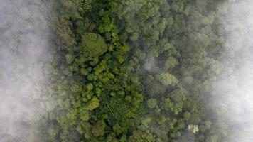 photo aérienne d'une forêt