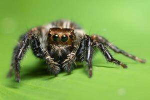 araignée sur une feuille verte photo