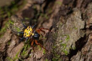 araignée sur un arbre