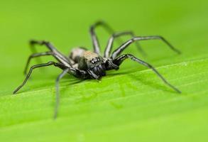 araignée macro sur une feuille photo