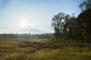 paysage dans le parc national de khao yai photo