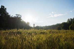 paysage au parc national de khao yai photo