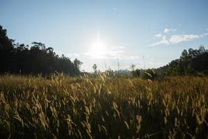 forêt au parc national de khao yai photo