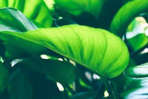 soleil brille à travers une feuille verte