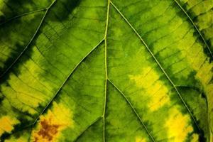 flou, gros plan, de, feuille automne photo
