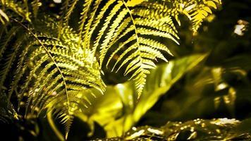 soleil du matin dans une forêt tropicale brumeuse photo