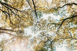regardant les arbres pendant la journée