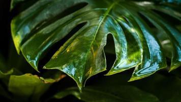 rosée sur les feuilles vertes texturées photo