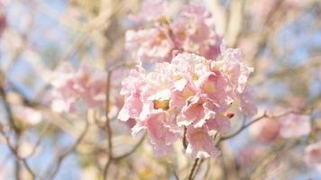 flou artistique de fleurs roses