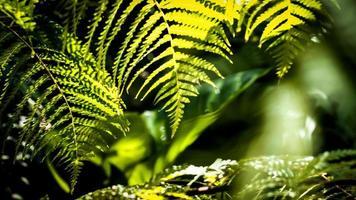 flou de lumière du soleil à travers les feuilles de fougère photo