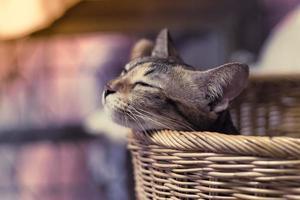 Petit chat brun dormant dans un panier photo
