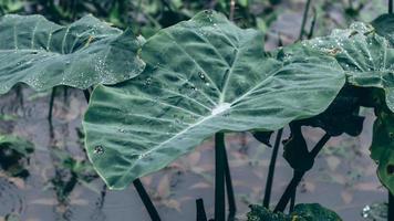 feuilles avec des gouttes d'eau photo