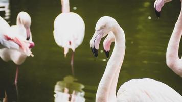 un groupe de flamants roses dans un étang