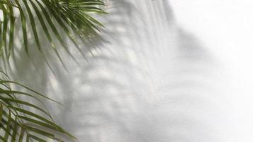 feuilles de palmier vert avec ombre sur fond blanc photo