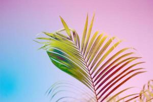 fond de feuille de palmier tropical coloré