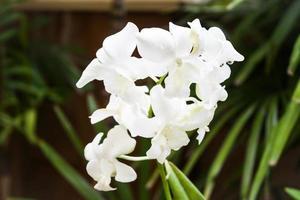 gros plan, de, orchidées blanches photo