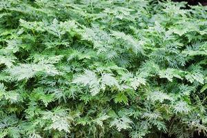 feuilles vertes dans un jardin