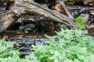 mini cascade dans un jardin