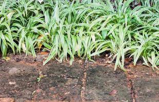 plans verts près du trottoir