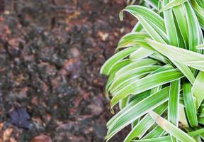 plante verte et sol