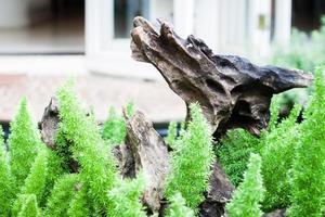 tronc d'arbre qui sort de feuilles vertes