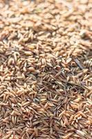 gros plan de riz photo